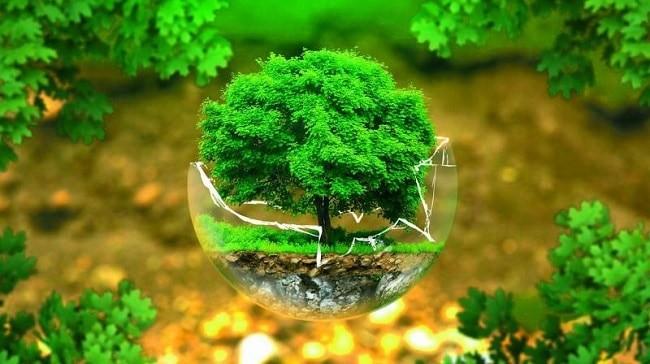 bitki koruma bolumu nedir egitim